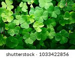 Small photo of background green shamrock/ nature background, fresh green juicy color, shamrock plant