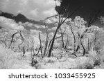 scenic marsh swamp with dead... | Shutterstock . vector #1033455925