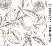 hand drawn botanical... | Shutterstock . vector #1033466848