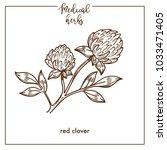 red clover medical herb sketch...   Shutterstock .eps vector #1033471405