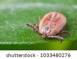 the tick is sitting on a green... | Shutterstock . vector #1033480276