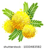 yellow mimosa bouquet fluffy... | Shutterstock .eps vector #1033483582