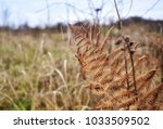 Small photo of Tuzla/Bosnia and Herzegovina, 10/22/2017: Fern exposed in front of grass