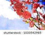 spring flowers. sakura | Shutterstock . vector #1033542985