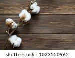 dried white fluffy cotton... | Shutterstock . vector #1033550962