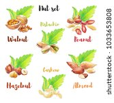 nut set hand drawn with colored ... | Shutterstock . vector #1033653808