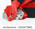 Stock photo sad kitten cute kitten with a red bow a kitten with a red ribbon kitten as a gift 1033675882