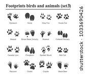 wildlife animals and birds... | Shutterstock .eps vector #1033690426