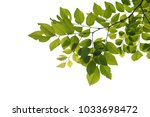 green tree branch isolated | Shutterstock . vector #1033698472