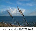Dorset Beach With Reeds
