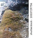 Small photo of Lichen on laterite cube