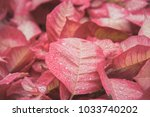 red plant leaf with drops of... | Shutterstock . vector #1033740202
