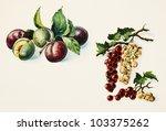 Color Illustration Of Fruits I...