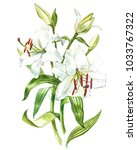 watercolor set of white lilies  ... | Shutterstock . vector #1033767322