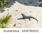 big iguana is basking in the sun | Shutterstock . vector #1033783222