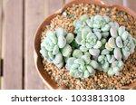 succulents closeup image   Shutterstock . vector #1033813108