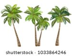 coconut palm tree  cocos... | Shutterstock .eps vector #1033864246