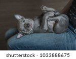 adorable puppy lying down on... | Shutterstock . vector #1033888675