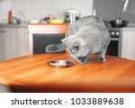 cat eats food from bowl at... | Shutterstock . vector #1033889638