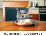 Cat Is Looking At Food Watches...