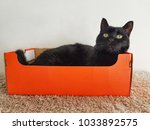 cat in a box | Shutterstock . vector #1033892575