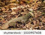 varanus lizard in the... | Shutterstock . vector #1033907608