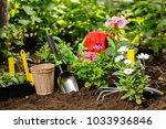 flowers in pot before planting...   Shutterstock . vector #1033936846