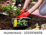 gardener woman planting flowers ... | Shutterstock . vector #1033936858