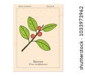 indian banyan  ficus... | Shutterstock .eps vector #1033973962