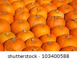 Colorful Pumpkins Collection O...