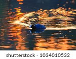 bird floats in the golden rays... | Shutterstock . vector #1034010532