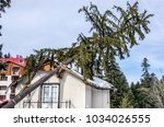 the tree that after the storm... | Shutterstock . vector #1034026555