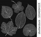 set colored silver leaves.... | Shutterstock .eps vector #1034034115