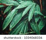 beautiful of green tropical...   Shutterstock . vector #1034068336