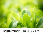closeup nature view of green... | Shutterstock . vector #1034127175