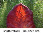 red leaves and shadow of flower ... | Shutterstock . vector #1034224426