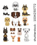 images of a cute purebred dogs... | Shutterstock .eps vector #1034250772