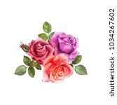 watercolor drawing flowers of... | Shutterstock . vector #1034267602