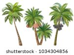 coconut  date and acai palm... | Shutterstock .eps vector #1034304856