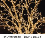 trees of light bulbs on the...