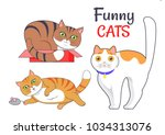 funny cats sleeping in red box  ... | Shutterstock .eps vector #1034313076
