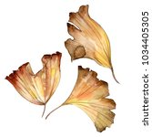 ginkgo leaves in a watercolor... | Shutterstock . vector #1034405305