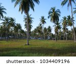 palm trees over blue sky... | Shutterstock . vector #1034409196