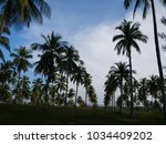 palm trees over blue sky... | Shutterstock . vector #1034409202