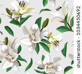white flowers of lily  madonna... | Shutterstock .eps vector #1034450692