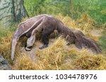 copenhagen  zealand region  ... | Shutterstock . vector #1034478976
