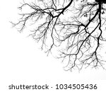 branch of tree silhouette on... | Shutterstock . vector #1034505436