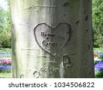Lovers Names On A Tree Trunk