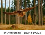 owl in forest habitat  wide... | Shutterstock . vector #1034519326
