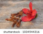 red cotton tree flowers on... | Shutterstock . vector #1034544316